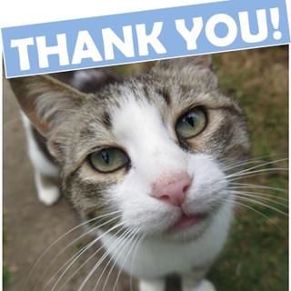 Catastophes Cat Rescue, East Sussex