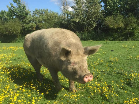 Brook Farm Animal Sanctuary, Northants