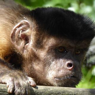 Wild Futures' Monkey Sanctuary, Cornwall