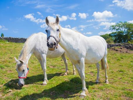 Farplace Animal Rescue, County Durham