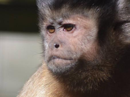 Wild Futures Monkey Sanctuary, Cornwall