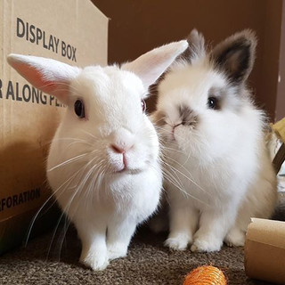 Urbun Sanctuary Rabbit Rescue, Manchester