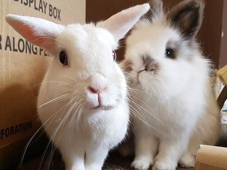 Urbun Sanctuary Rabbit Rescue, Cheshire