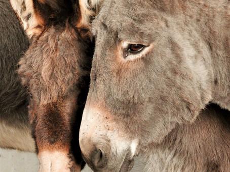 The Flicka Foundation Donkey Sanctuary, Cornwall
