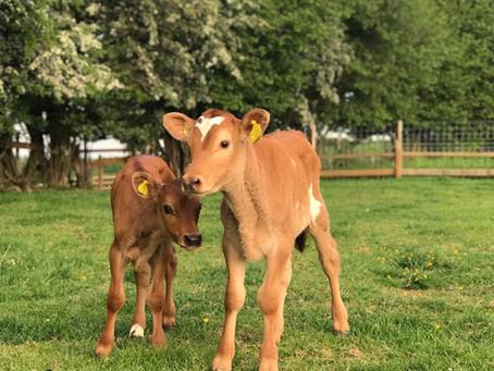 Dean Farm Trust, Wales