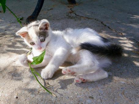 Care for Cretan Cats, Greece