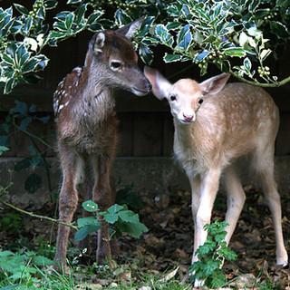 Hillside Animal Sanctuary, Norfolk