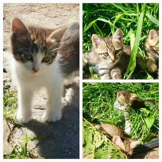 APAM Animals Sanctuary, Romania