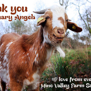 Mino Valley Farm Sanctuary, Spain