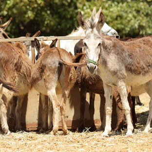 Safe Haven for Donkeys in the Holy Land