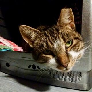 Feline Care Cat Rescue, Norfolk