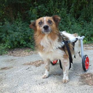 Stray Animals Rescue, Bulgaria