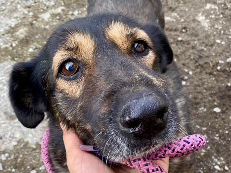 Evermore Dog Rescue, UK / Romania