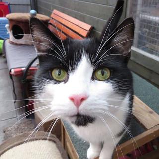 Ward End Cat Rescue, Birmingham