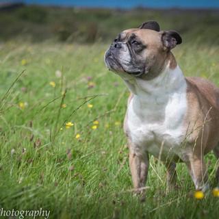 Animals in Need, Northamptonshire