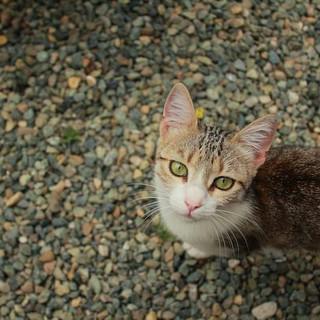 Parodi's Cat Refuge, Italy