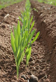 seedbed-preparation.png