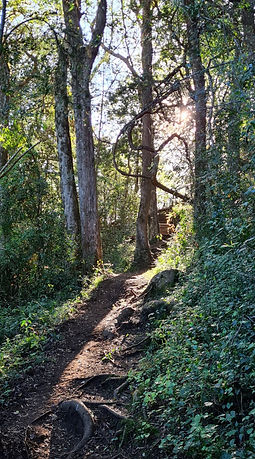 Path photo.jpg