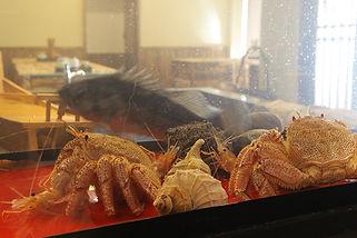 札幌すすきの 活魚 海鮮 炉ばた いそ舟 新鮮な海老、蟹