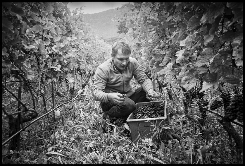 Au fil des vignes_06