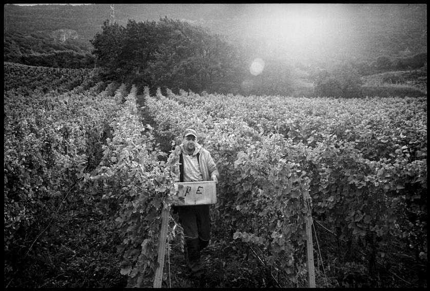 Au fil des vignes_07
