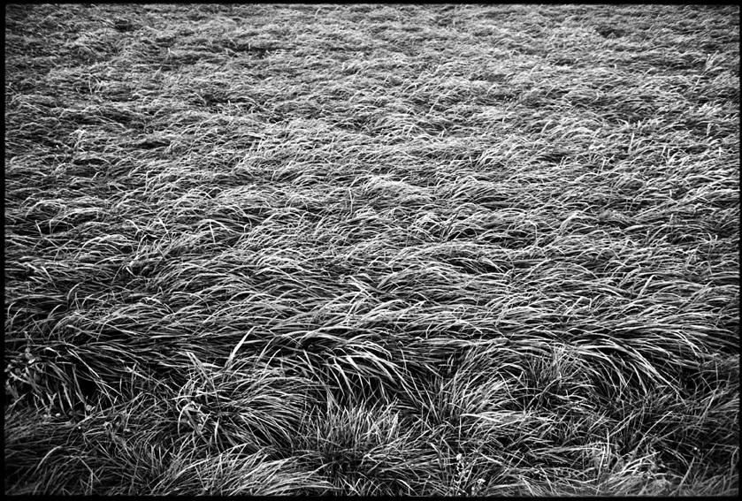 Au fil des vignes_08