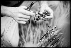 Au fil des vignes_03