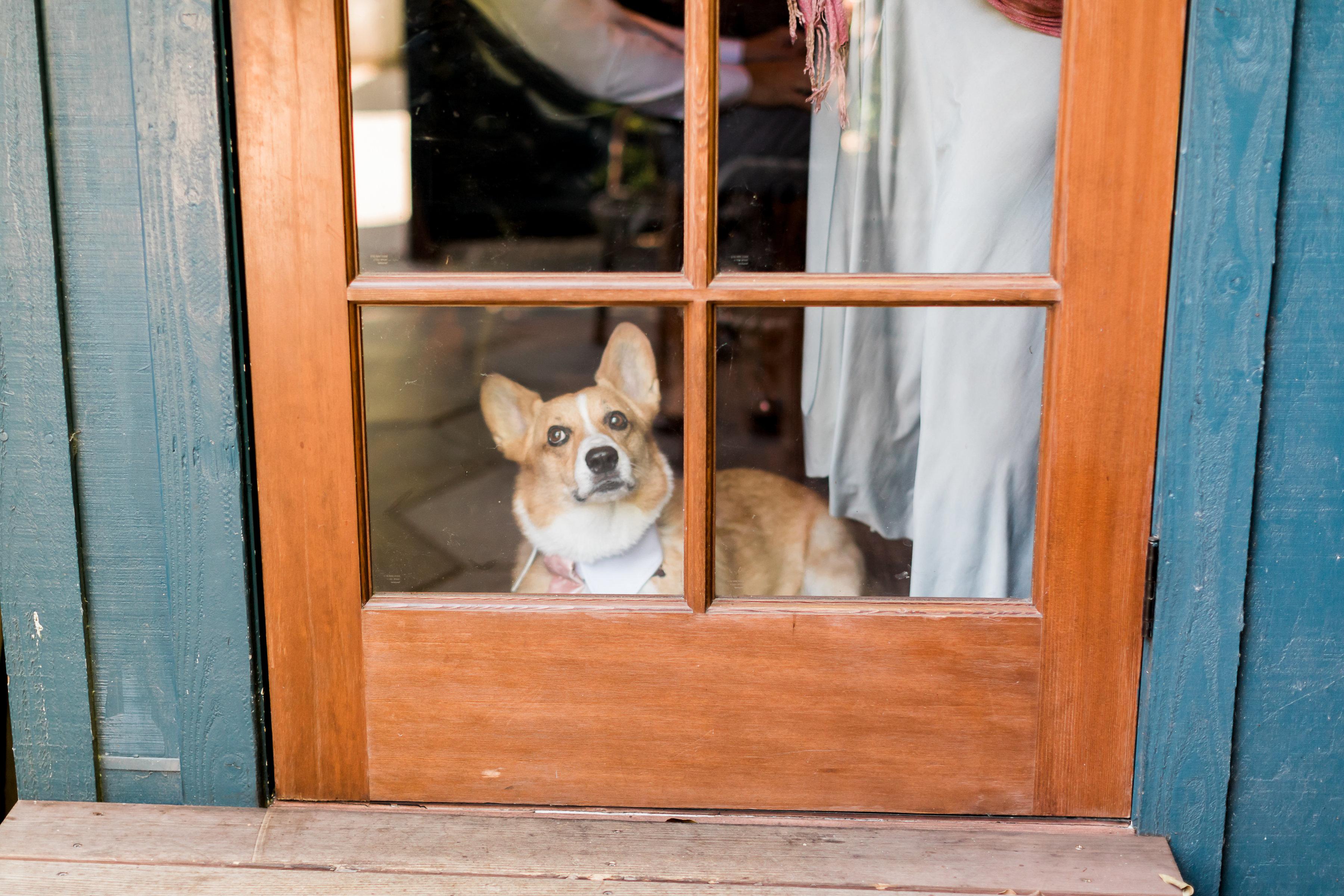 Fig House Wedding - Corgi- Dog Ring Bear