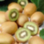 sliced kiwi 3.jpg
