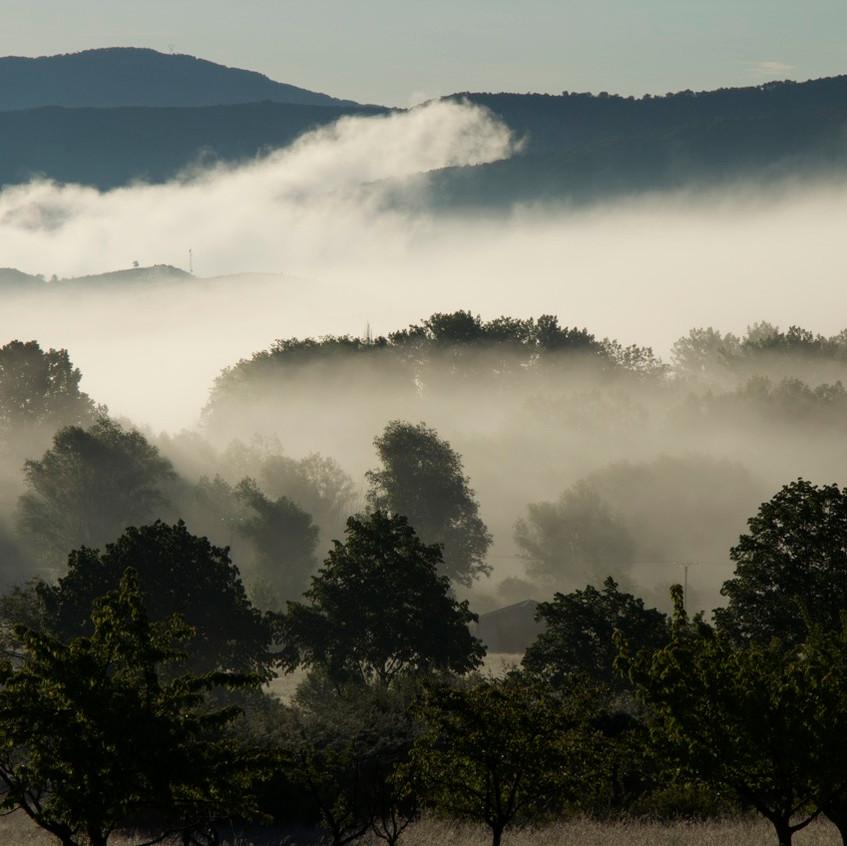 Brume matinale à la Palud