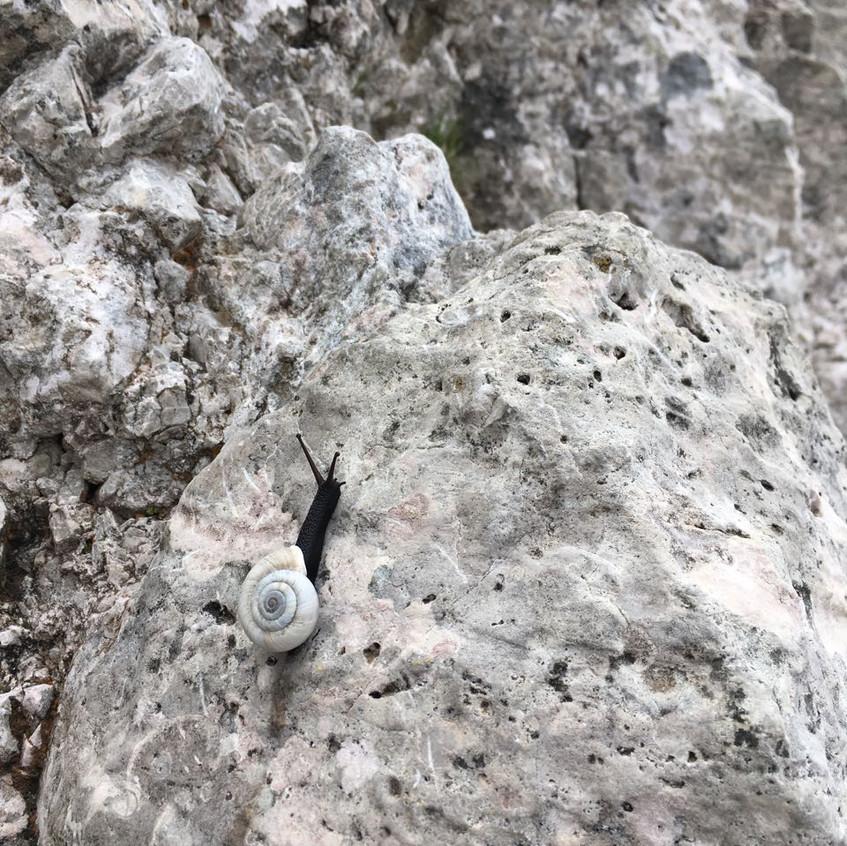 Les jolis petits escargots locaux