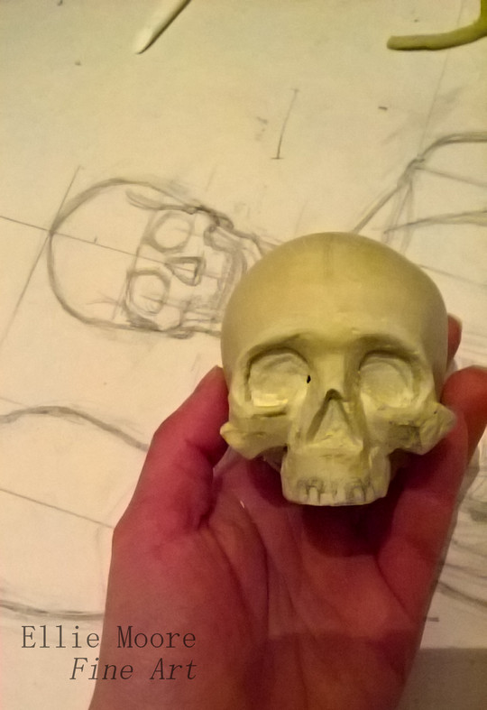 Calvaria, maxilla and zygomatic bones progress