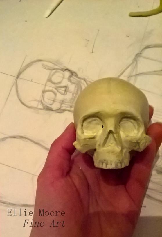 Calvaria, maxilla and zygomatic bones progress