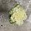Thumbnail: Chou d'ornement blanc