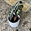 Thumbnail: Alocasia Polly et son cache pot blanc
