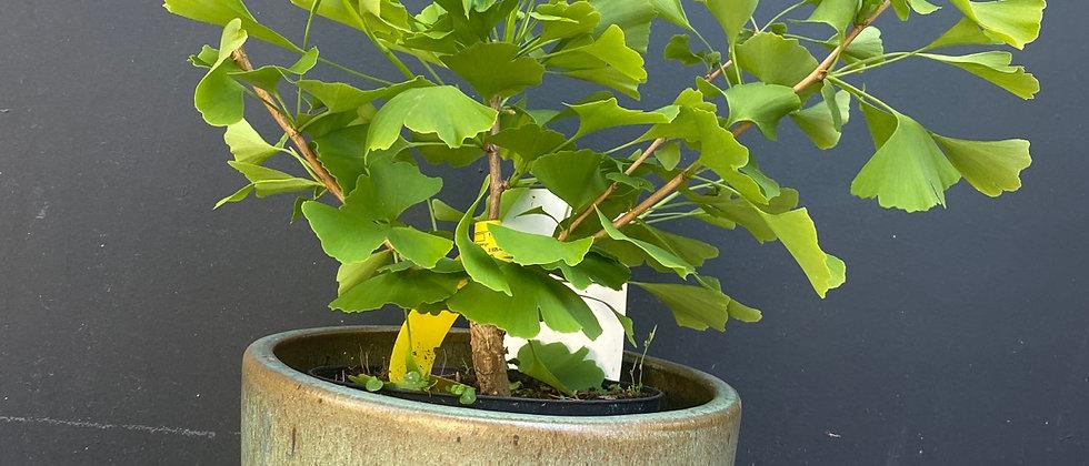 Pot Pure Green XS