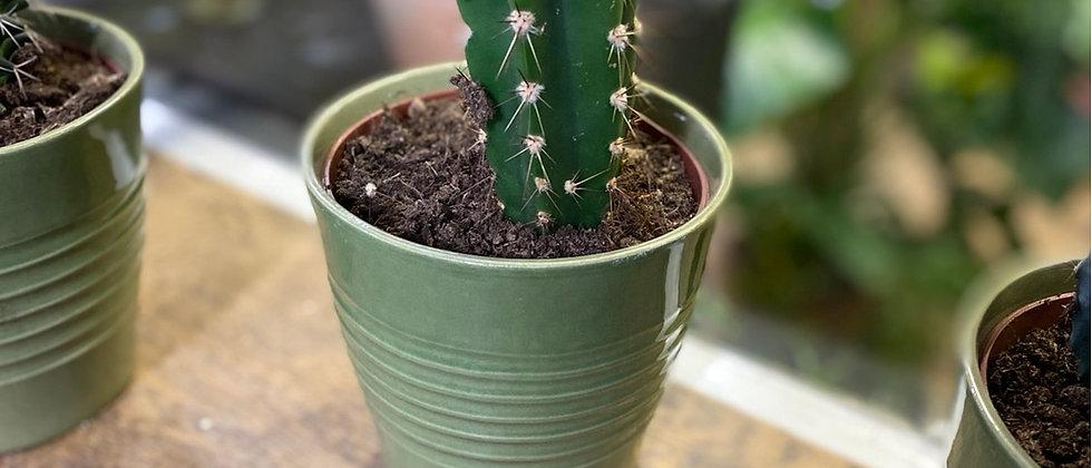 Cactus et cache pot