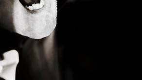 Tipos de Predador da Quinta Edição de Vampiro a Máscara parte 4