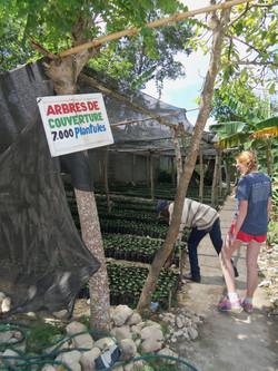 Seedlings at coffee cooperative (3)