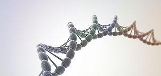 Your genes  (DNA)