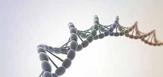 テロメアはDNAの先端を保護するキャップの役割をはたします。