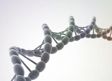 Genética y Obesidad