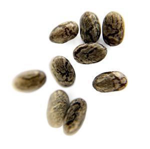 Zoom graines de chia variété monca grain