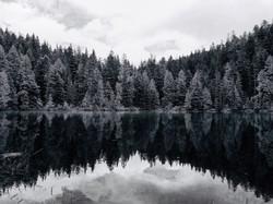 Treeline Symmetry