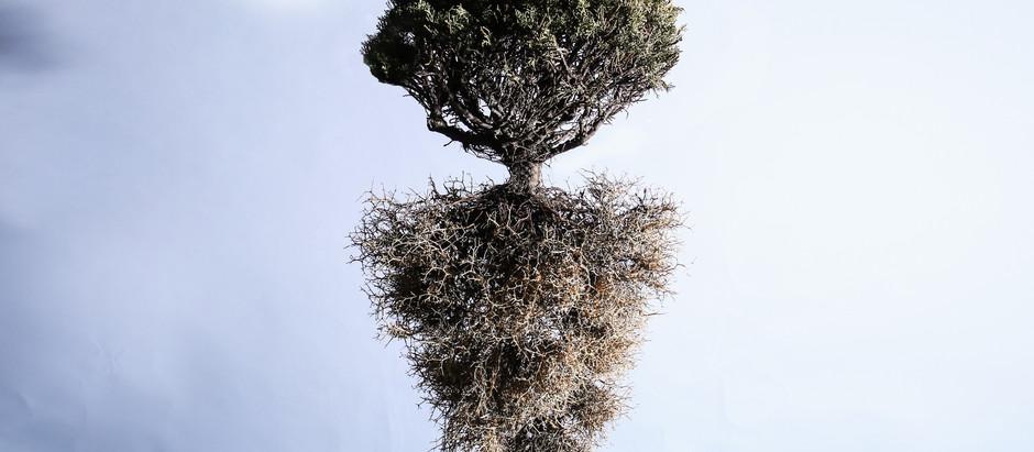 シーブッシュで魅せる作品【FLORAL ART WORK /植物に触れる】GANON FLORIST