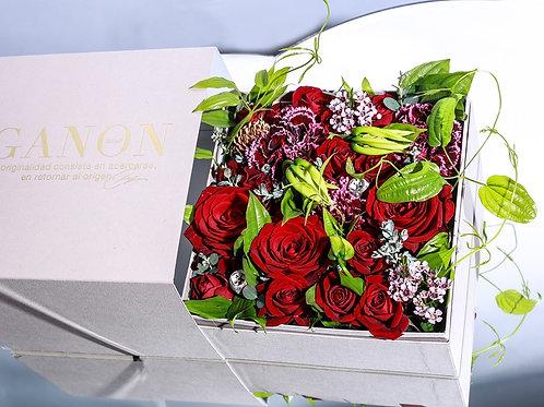 GANON BOX Red