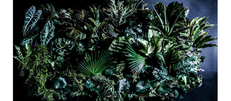 Hikaru Seinoによる南国の植物ディスプレイ【FLORAL ART WORK / 植物に触れる】