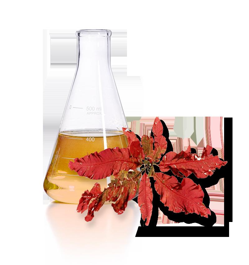 red algae Anti Aging Ingredient