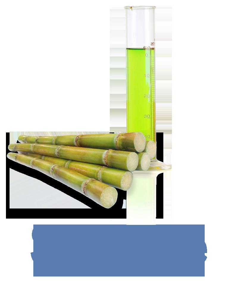 Sugarcane Anti-aging Ingredient