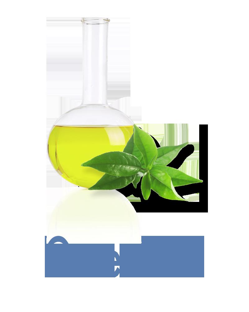 Green Tea Anti-aging Ingredient